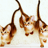 kitty_trio: A trio of kittens (Default)