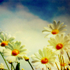 youarefree: (misc: daisies you can shake all that sor)