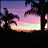 opusculus: Sunset with palm trees framing the faint city (Sunset at home)