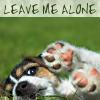 adafrog: (Puppy.leavemealone)