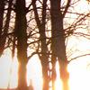 allison: (trees)