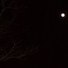 alee_grrl: Tree branches silhouetted against a full winter moon. (moon)