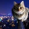 thousanth: (Misc - Cityguardian kitty)