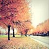 ria: Autumn trees. (autumn trees)
