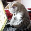 moth2fic: cat typing (writing_typingcat)