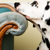 unavoidedcrisis: dalmatian resting its head on the arm of a couch (resting dalmatian)