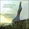 vaznetti: (wandering albatross)