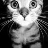 piefaced: (stock: ohhhhhh~! kitty cat)