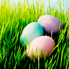 evil_witch666: (Easter)