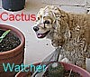 cactuswatcher: (Smiling Buffy)