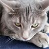 deathofdelilah: (kitten form)
