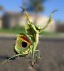 moniqueleigh: (Celebration - Mantis)