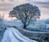 perverse_idyll: (snowy tree on road)