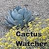 cactuswatcher: (Adjusted Agave)