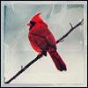 libskrat: (cardinal)