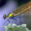 libskrat: (dragonfly)