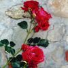 kaylashay81: (Rose)
