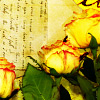 challyzatb: Yellow roses on a background with unclear writing. (yellowroseswriting)
