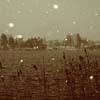 aliform: Indistinct brown dreamscape (dream)