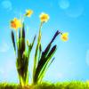 penny_sieve: (Spring)