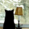 arliss: (window -my pic)