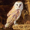 arliss: (owl)