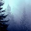 arliss: (doug firs fog)