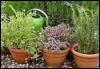 arliss: (herb pots)