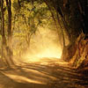 arliss: (golden legend tree)