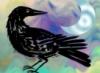 arliss: (crow)