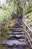 kyrielle: Stone steps with a bamboo railing, surrounded by plants, leading up (stairs)