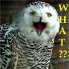 kyrielle: (what? - owl)