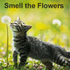 kyrielle: (smell the flowers)