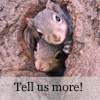 kyrielle: (squirrels in tree)