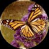 kyrielle: (butterfly)