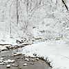 topaz119: (winter)