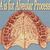 john_h_holliday: (a is for alveolar process)