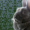 john_h_holliday: (dignified bunny)
