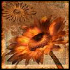 tinyjo: (sunflower)