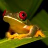 tinyjo: (froggie)
