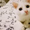 venus: ((❤) do you love me yet!!!)