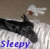 seorgia: (Pets: Sleepy)