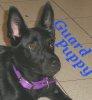 seorgia: (Pets: Guard Puppy)