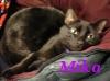 seorgia: (Pets: Mika)