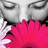 leigh_adams: (pink flower)
