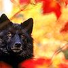 katekat: (_wolf)