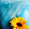 rika: (Sunflower)