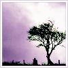 wyomingnot: (eveningtree)
