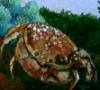 kidsnurse: (crabby [mare])