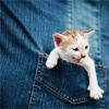 emmei: (cat in pocket)